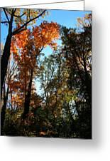 Orange Glowing Tree Greeting Card