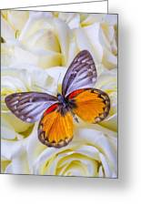 Orange Gray Butterfly Greeting Card