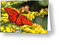 Orange Gulf Fritillary Greeting Card