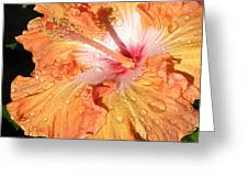 Orange Hibiscus After The Rain Greeting Card