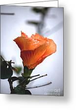 Orange Hibiscus Lax 2 Greeting Card by Deborah Smolinske