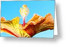 Orange Hibiscus Texture I Greeting Card