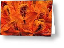 Orange Is In Greeting Card