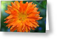 Orange Juice Greeting Card
