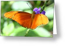 Orange Julia Butterfly Greeting Card