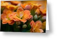 Orange Kalanchoe With Company Greeting Card
