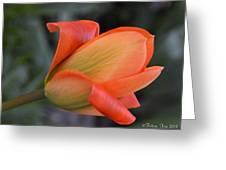 Orange Lady Greeting Card