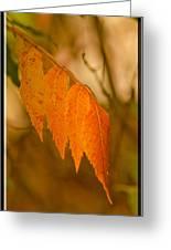 Orange Leaves Of Fall Greeting Card