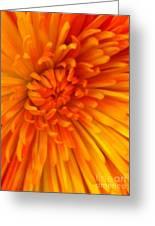 Orange Light Greeting Card