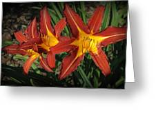 Orange Lillies Greeting Card