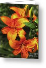 Orange Lillies Greeting Card