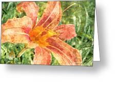 Orange Lily Greeting Card