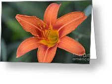 Orange Lily Photo 6 Greeting Card