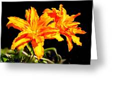 Orange Lily Twins Greeting Card