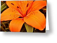 Orange Lily Greeting Card