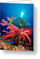 Orange-lined Triggerfish Balistapus Greeting Card