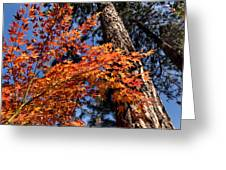 Orange Maple Greeting Card