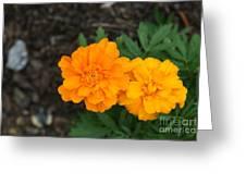 Orange Marigolds   # Greeting Card