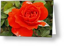 Orange Mini-rose Greeting Card