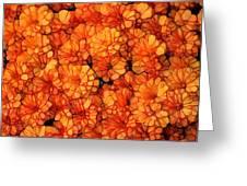 Orange Mums Greeting Card