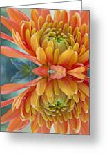 Orange Mum's Watery Reflection Greeting Card