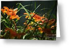 Orange Natural Beauty...   # Greeting Card