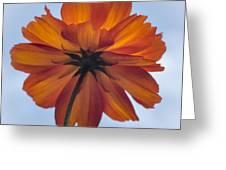 Orange On Blue Greeting Card