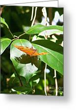 Orange On Green Greeting Card