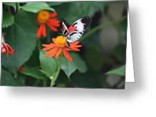 Orange On Orange Greeting Card