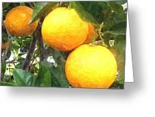 Orange On Tree Greeting Card