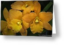 Orange Orchid Group Greeting Card