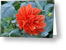 Orange Pedals Greeting Card