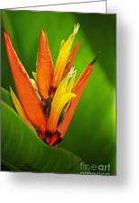Orange Pocket Fold Greeting Card