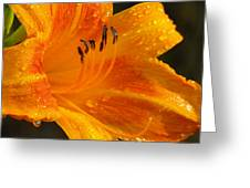 Orange Rain Greeting Card