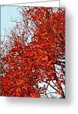 Orange Red Blanket Greeting Card