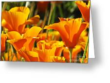 Orange Rising Greeting Card