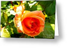 Orange Rose Bloom Greeting Card