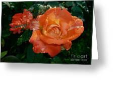 Orange Rose II Greeting Card