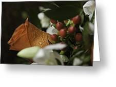 Orange Rose Greeting Card by Lesley Rigg