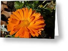 Orange Ruffles Greeting Card