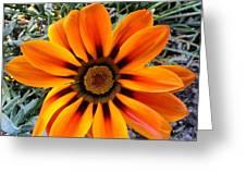 Orange Greeting Card by Saifon Anaya