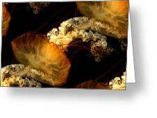 Orange Sea Nettle Greeting Card