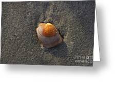Orange Seashell Greeting Card