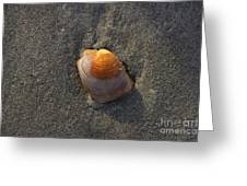 Orange Seashell Greeting Card