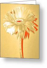 Orange Slice Zinnia Greeting Card