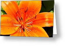 Orange Slices Greeting Card