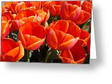 Orange Spring Tulip Flowers Art Prints Greeting Card