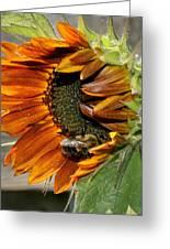 Orange Sunflower And Bee Greeting Card