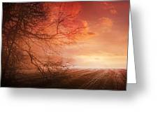 Orange Sunrise On Field Greeting Card by Dorothy Walker