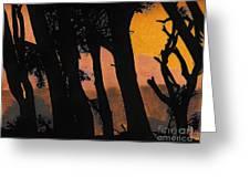 Orange Sunset Forest Greeting Card